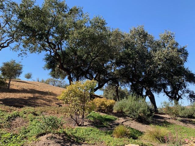 Santa Ynez CA